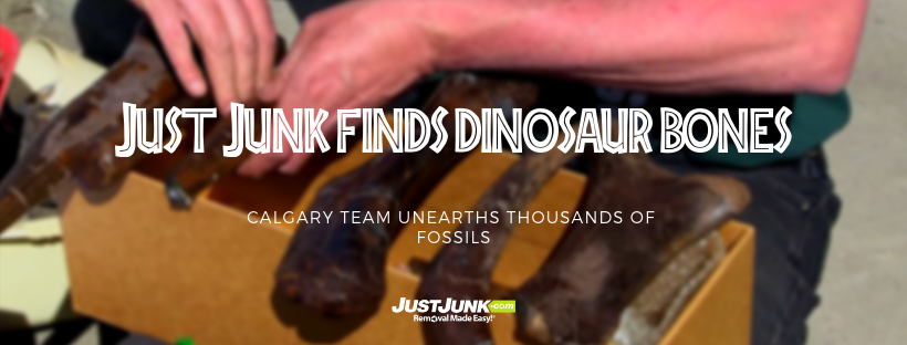Dino-Score! JUST JUNK Calgary Finds Thousands of Fossils! Featured Image